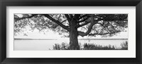 Framed Tree on a Lake, Wisconsin (black & white)