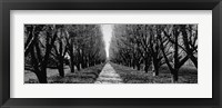 Framed Trees along a walkway in black and white, Niagara Falls, Ontario, Canada