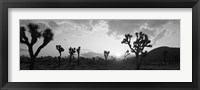 Framed Sunset, Joshua Tree Park, California (black and white)