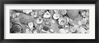Framed High angle view of seashells