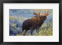 Framed Yellowstone Moose