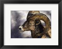 Framed Desert Bighorn Sheep