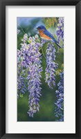 Framed Bluebird In Wisteria