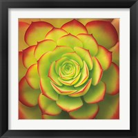 Framed Fiery Succulent
