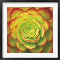 Framed Fiery Succulent