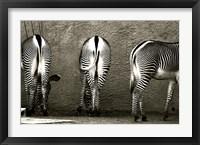 Framed Zebra Butts