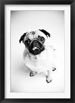 Framed Piggie 7