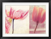 Framed Poppy & Tulip