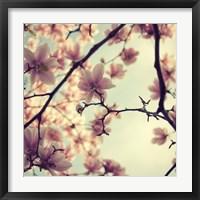 Framed Pink Blossoms