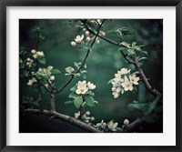 The Midnight Garden I Framed Print