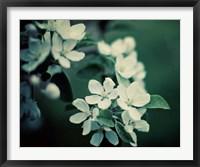 Framed Midnight Garden II
