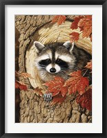 Framed Raccoon