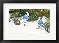 Framed Bluejays