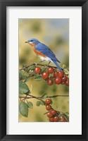 Bluebird Framed Print