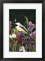 Framed Sweet Peas And Chickadee