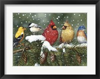 Framed Backyard Birds On Snowy Branch