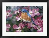 Framed Bluebird/Pink Dogwood