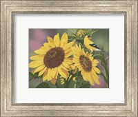 Framed Goldfinch And Sunflowers