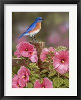 Framed Bluebird With Hibiscus