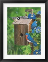 Framed Birds At The Feeder (Bluebirds)