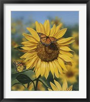 Framed Sunflower/Butterflies