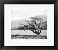 Framed Connemara Tree I