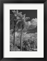 Framed Eleven Palms