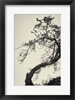 Framed Winter Plum