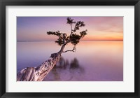 Framed Water Tree XI