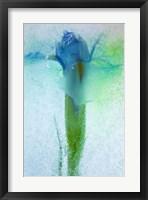 Framed Flowers on Ice-7