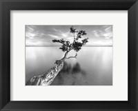 Framed Water Tree XIII