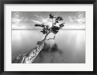 Framed Water Tree XIII