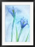 Framed Flores Azules 57