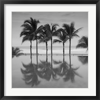 Framed 6 Palmeras