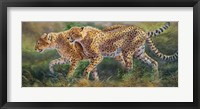 Framed March Of The Cheetahs
