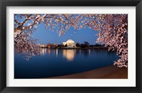 Framed Cherry Blossom Tree with Jefferson Memorial, Washington DC