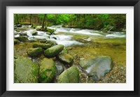 Framed Stream following through a forest, Little River, Great Smoky Mountains National Park, Tennessee, USA