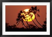 Framed Sunrise behind silhouetted trees, Kenya, Africa