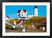 Framed Seagulls at Nubble Lighthouse, Cape Neddick, York, Maine, USA