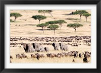 Framed Wildebeests with African elephants (Loxodonta africana) in a field, Masai Mara National Reserve, Kenya