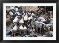 Framed Wildebeests, Masai Mara National Reserve, Kenya