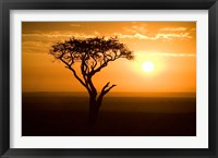 Framed Silhouette of tree at dusk, Tanzania