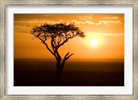 Framed Silhouette of tree at dusk, Tanzania