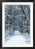 Framed Snow Covered Road Through a Forest, Washington State