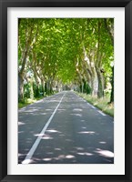 Framed Allee of trees, St.-Remy-De-Provence, Bouches-Du-Rhone, Provence-Alpes-Cote d'Azur, France