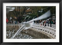 Framed People feeding the gulls in a park, Green Lake Park, Kunming, Yunnan Province, China