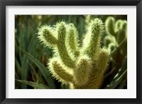 Framed Cactus in sunlight