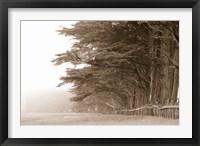 Framed Cypress trees along a farm, Fort Bragg, California, USA