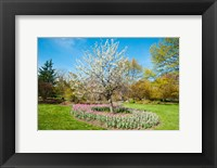 Framed Tree in Sherwood Gardens, Baltimore, Maryland