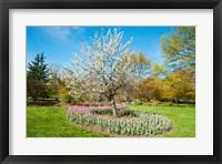 Framed Tree in Sherwood Gardens, Baltimore, Maryland